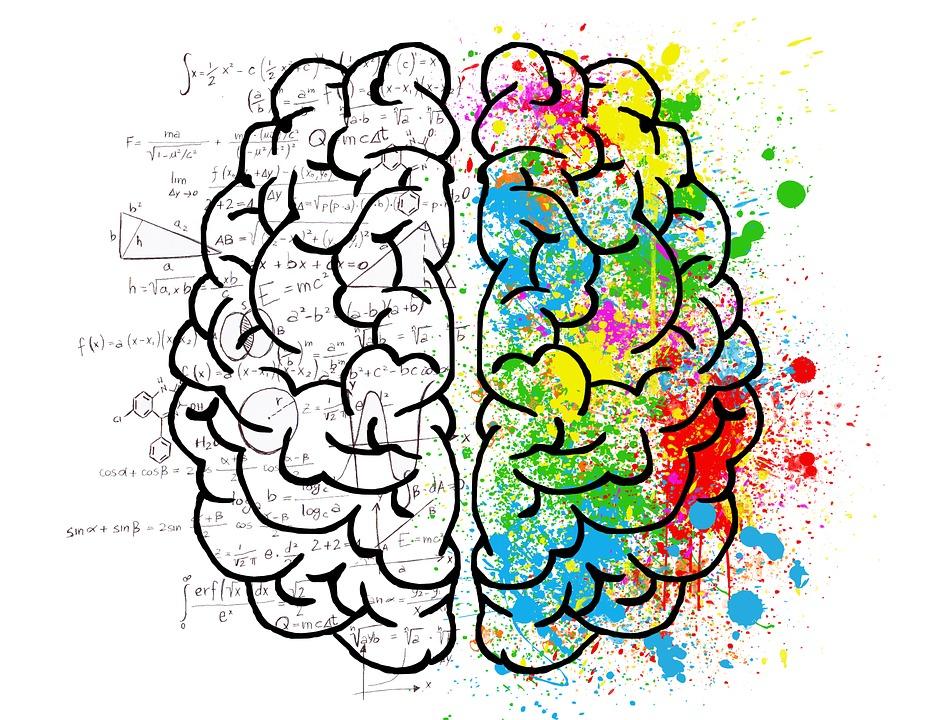CBD-hersenen