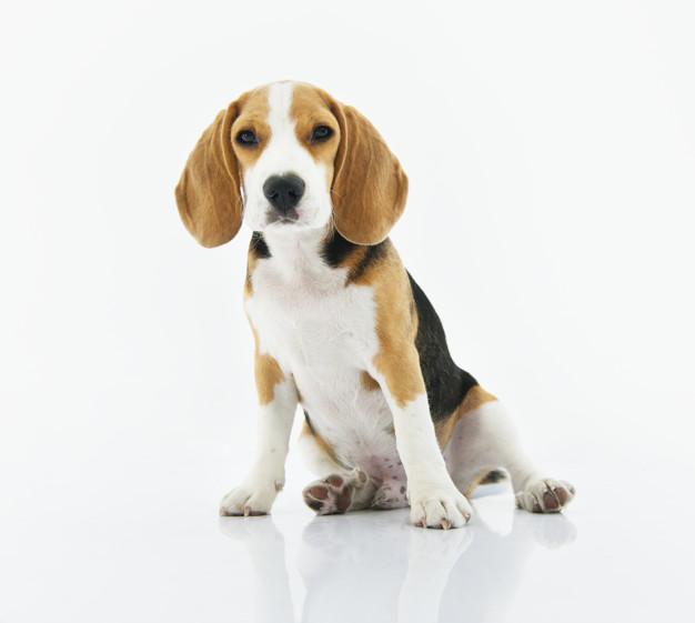 cbd-olie-voor-honden