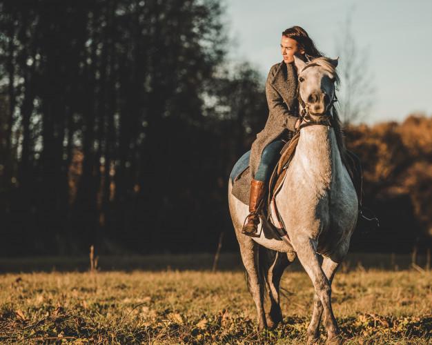 CBD-bij-paarden1