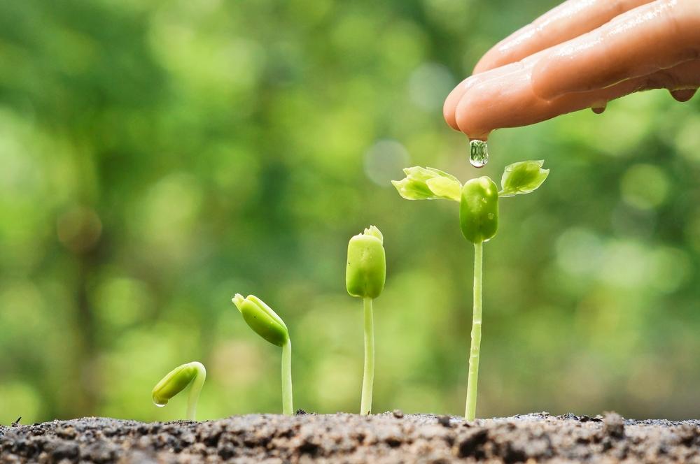 cannabis-zaden-in-aarde-zetten